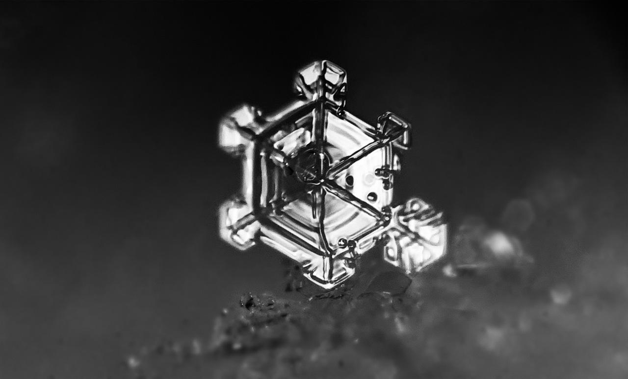 snowflake-macro_01